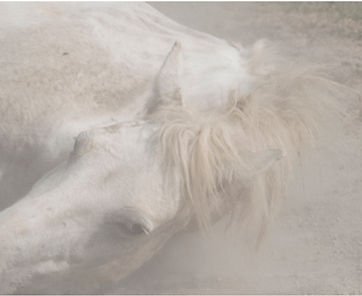 andrea_c_morley_chevaux_sauvages_006_hig
