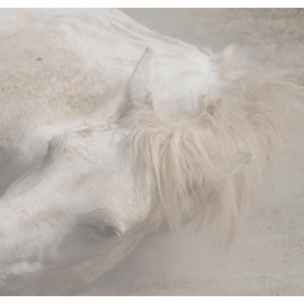 """chevaux sauvages 43º22'32""""N 4º48'37""""E #06 by Andrea C Morley"""