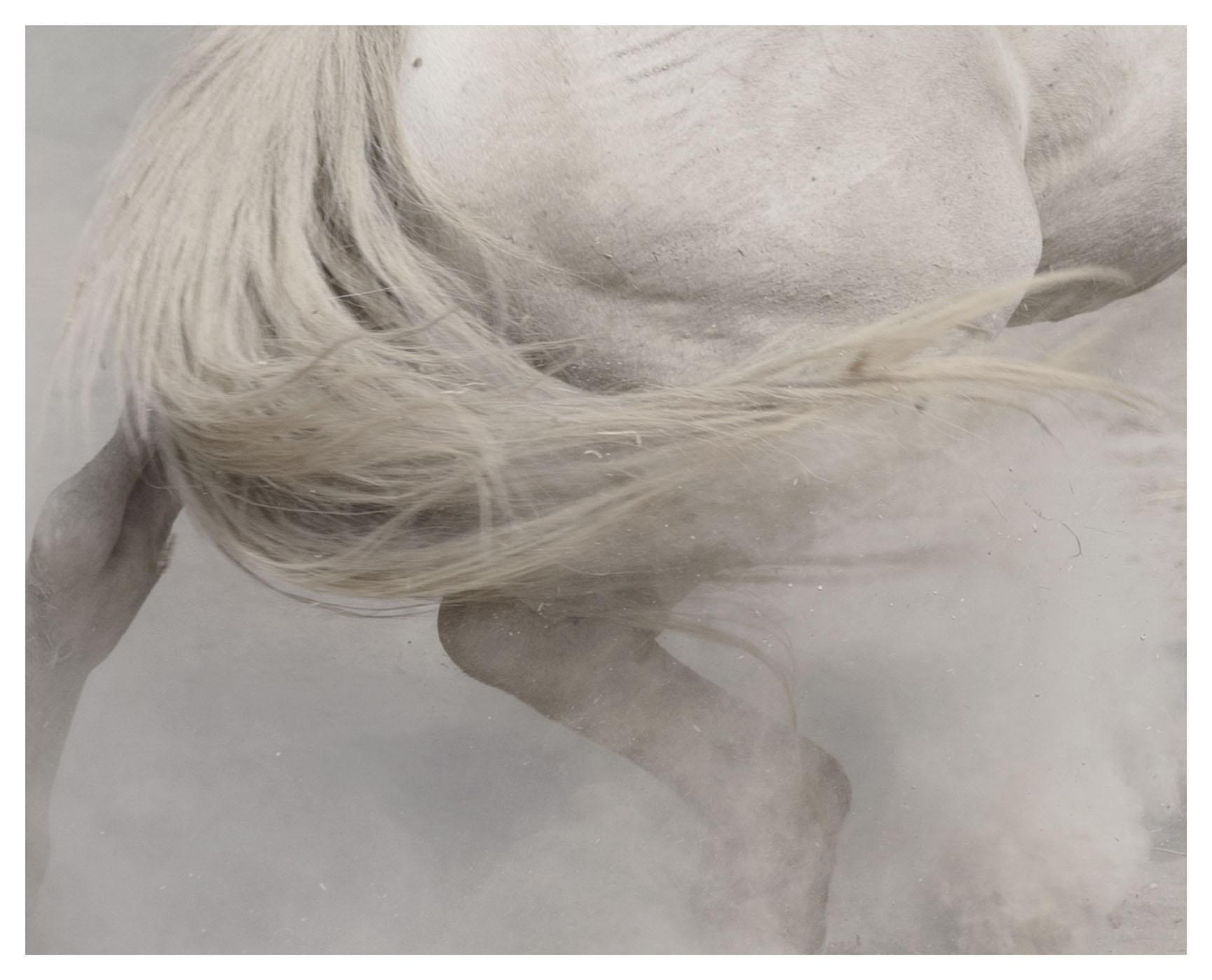 """chevaux sauvages 43º22'32""""N 4º48'37""""E #09"""