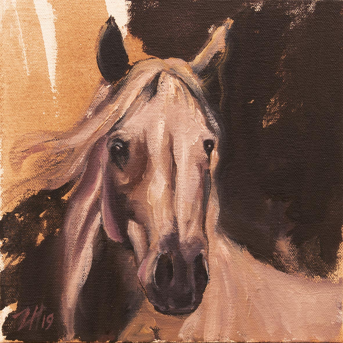 Equine Head Arab White (study 3)