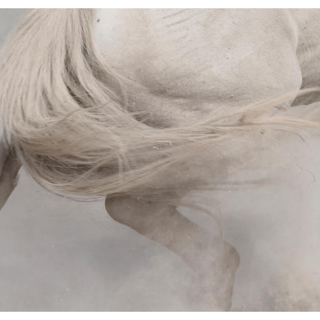 """chevaux sauvages 43º22'32""""n 4º48'37""""e #05 by Andrea C Morley"""