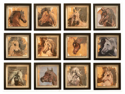 Equine Head Arab studies