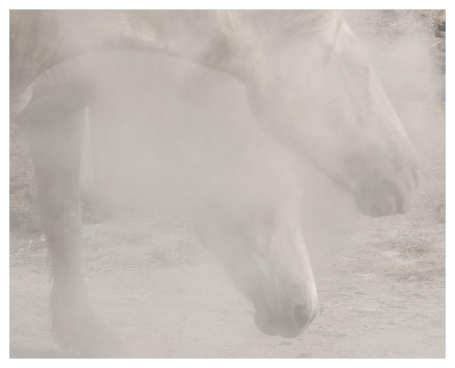 """chevaux sauvages 43º22'32""""N 4º48'37""""E #04"""