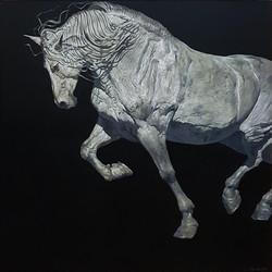 Stallion, Movement (Trot)