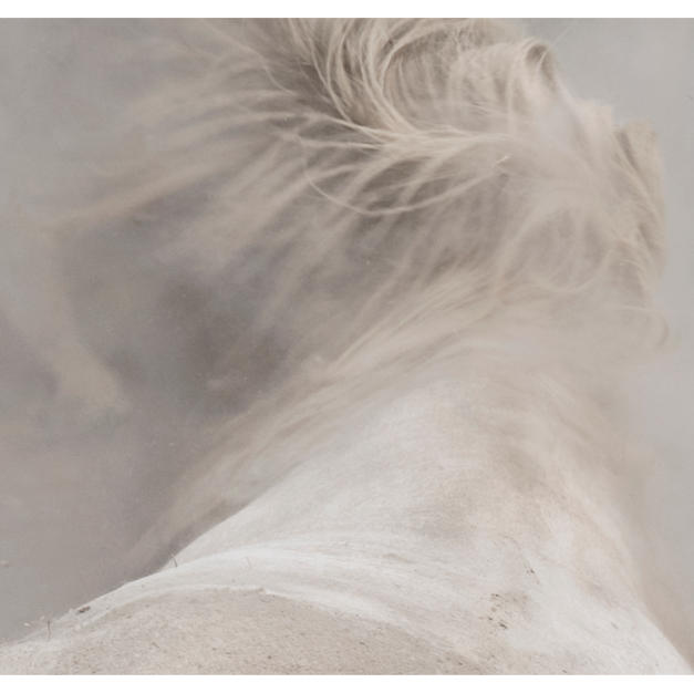 """chevaux sauvages 43º22'32""""N 4º48'37""""E #08 by Andrea C Morley"""