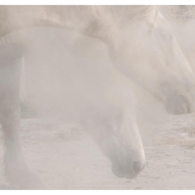 """chevaux sauvages 43º22'32""""n 4º48'37""""e #04 by Andrea C Morley"""