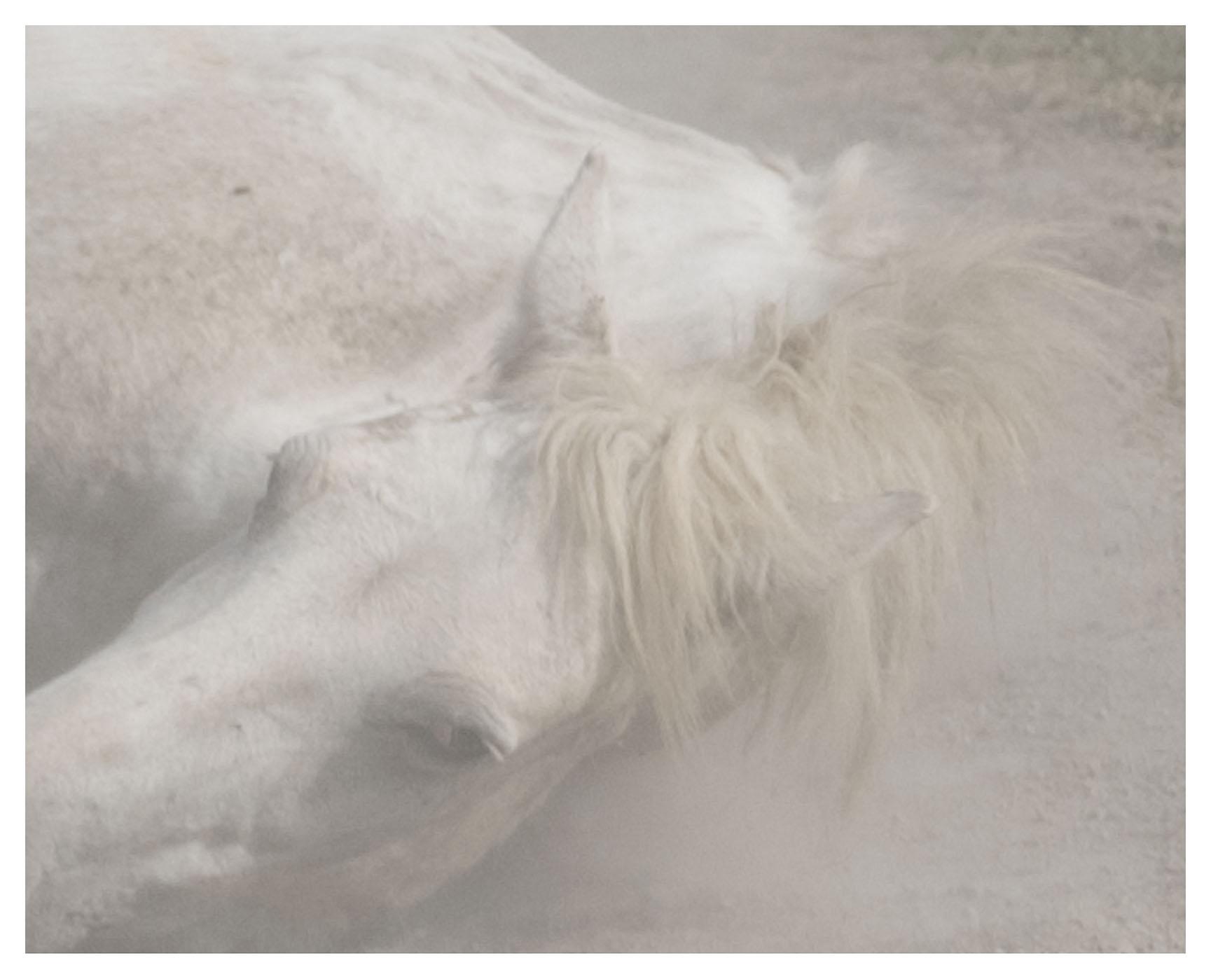 """chevaux sauvages 43º22'32""""N 4º48'37""""E #08"""
