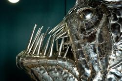 Angler Fish