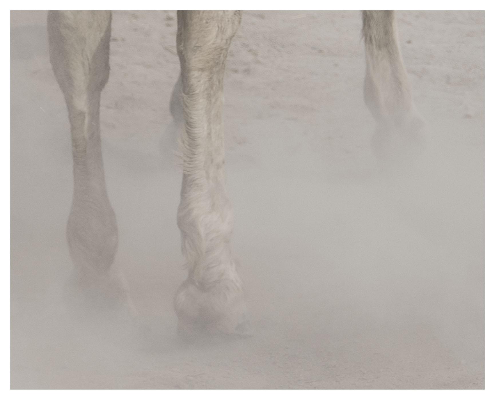"""chevaux sauvages 43º22'32""""N 4º48'37""""E #03"""