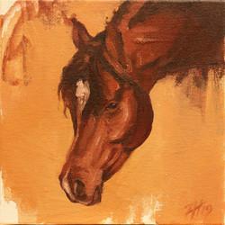 Equine Head Arab Chestnut (study 14A)