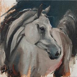Equine Head White (study 1)
