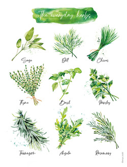 The everyday herbs