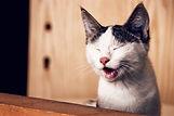 adorable-animal-animal-photography-11834