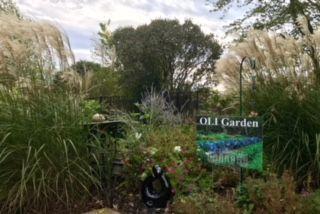 OLI Gardens