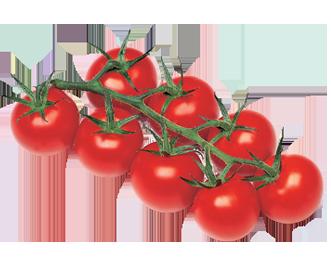 Tomate Cocktail cultivées sans pesticides (645)