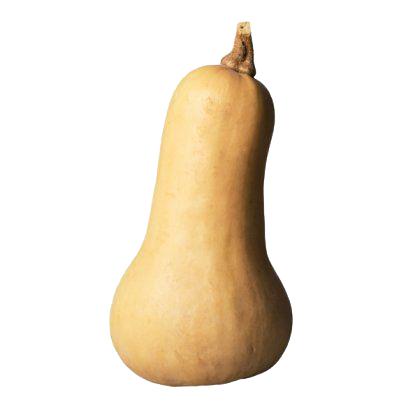COURGE Butternut (995)