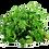 Thumbnail: Herbe aromatique en Botte (514)