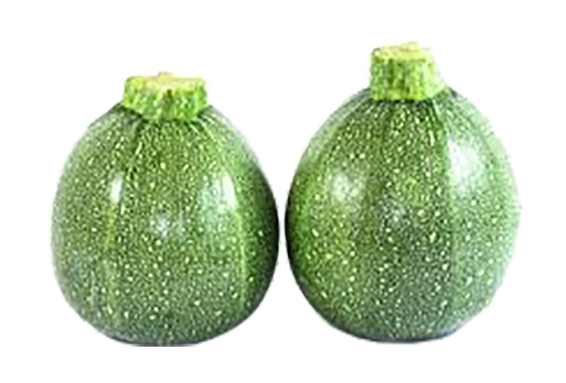 COURGETTE Ronde (924)