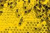 bees-345628_1920_edited.jpg