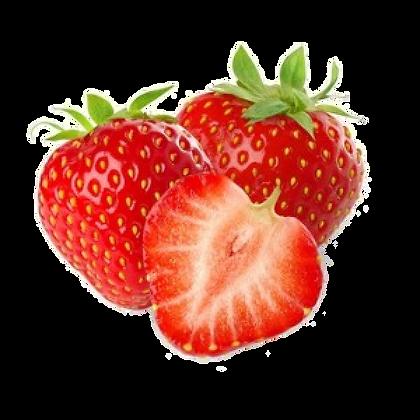 Fraise variété Elsanta (226)