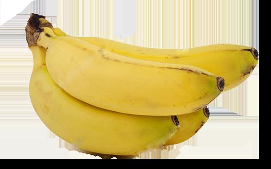 Banane variété cavendish (214)