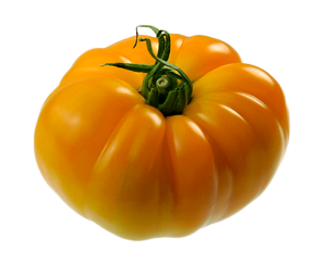 Tomate Ananas d'antan (508)