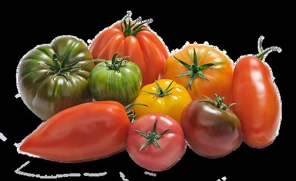 Tomates Saveur d'Antan Panaché (505)