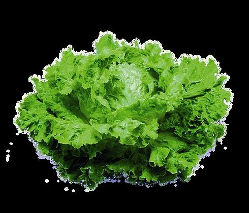 Salade BATAVIA (901)