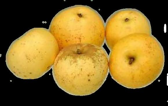 Pomme Reinette d'Armorique (850)