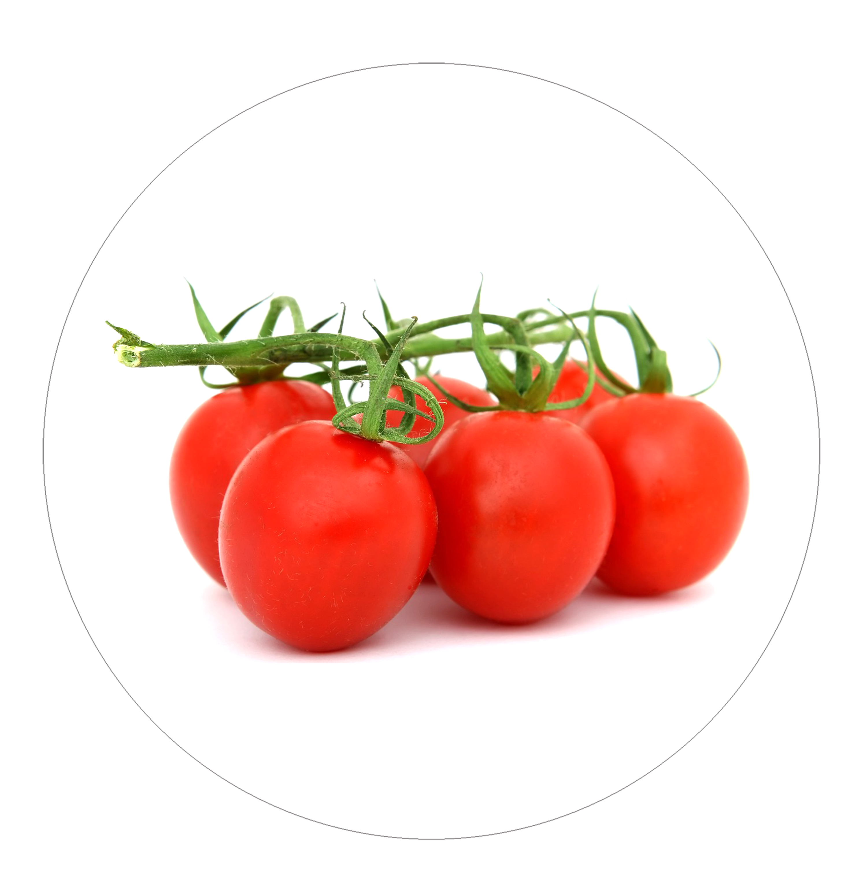 TOMATE Cercle