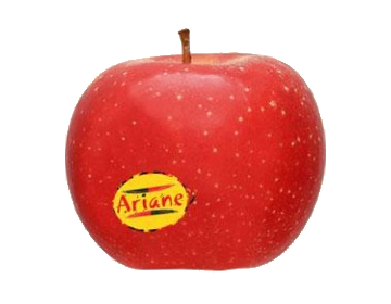 POMME Arianne (805)