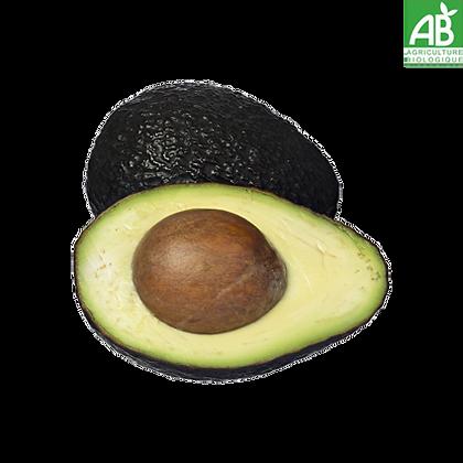Avocat Bio variété Hass Gros Calibre X2 (609)
