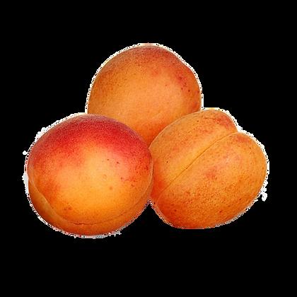 ABRICOT Sélection variété Orangered de France (827)