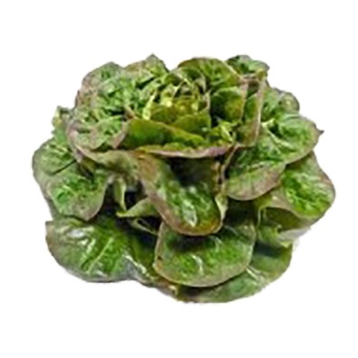 Salade ROUGETTE (903)