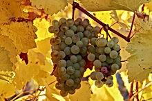 Tous les Vins.jpg