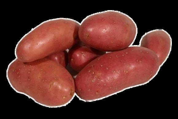 Pomme de Terre à Chair Ferme variété Chérie (703)