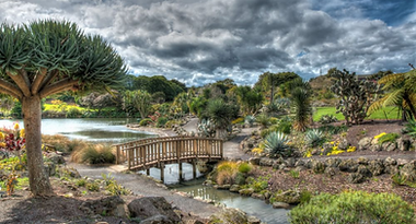 Auckland gardens.png