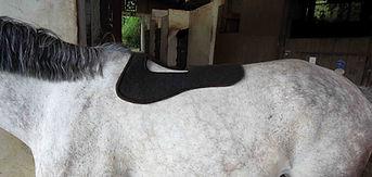 Amortisseur Mouton Noir