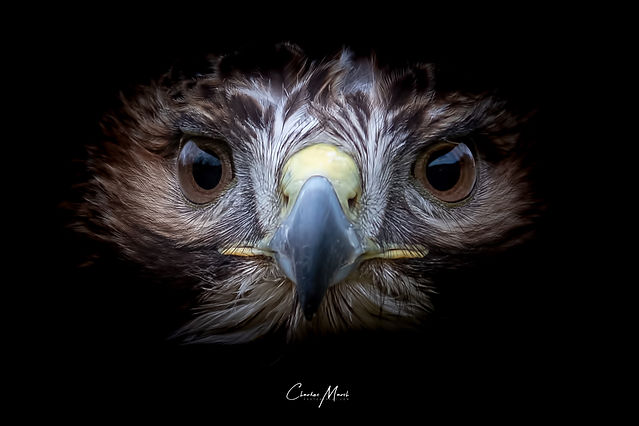 @CharlesMarshPhotography --15.jpg