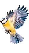 winter-bird-png-4_edited.png