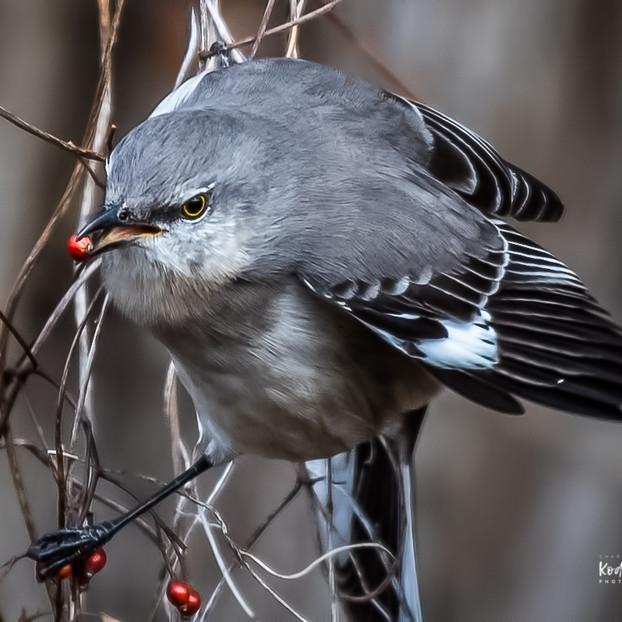 Small Bird Collection