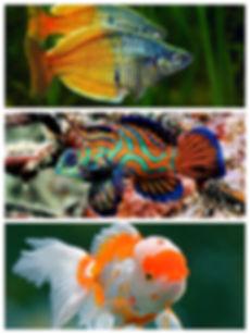 Collage_3fish.jpg