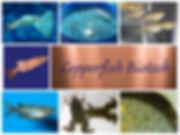 Collage7.jpg