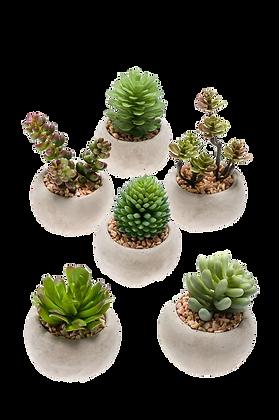 Plante SUCCULENTES  Modèles variés