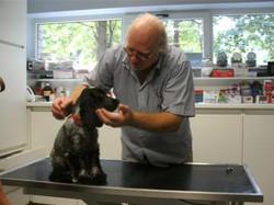 Controle van een pup