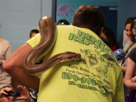 Snake Day with Renos Reptiles
