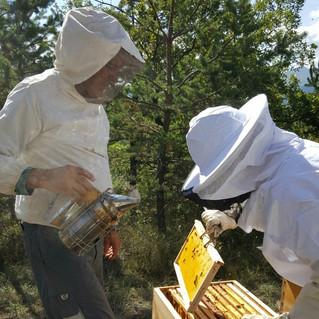 SAMEDI 22 AVRIL - Atelier d'initiation à l'apiculture