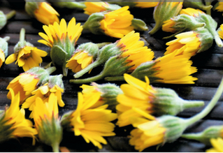 ATELIER : Reconnaître les plantes sauvages comestibles SAMEDI 6 AVRIL