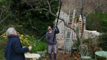 Les travaux du jardin en Février