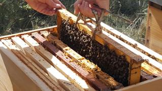DIMANCHE 11 JUIN - Nouvel atelier apiculture de 9h30 à 11h30